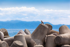 Bird of Prey and Tetrapods royalty free stock image