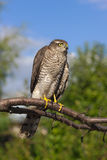 Bird of prey on a tree branch stock image