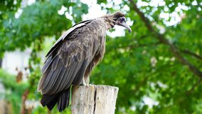 Bird of prey Stock Image