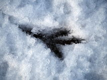 Bird print in the snow Royalty Free Stock Photo