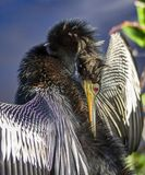Bird Pruning Morning Sunshine Royalty Free Stock Photography