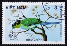 Bird Psarisomus dalhousiae, series animals, circa 1986 Royalty Free Stock Image