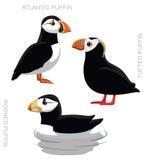 Bird Puffin Set Cartoon  Royalty Free Stock Photos