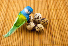 bird and quail eggs Royalty Free Stock Image