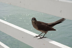 Bird on rail by sea Royalty Free Stock Photography