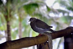 The bird on the railing royalty free stock photography