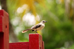 Bird on the railing. A small solitary bird on the red railing of an amusement park Stock Photo