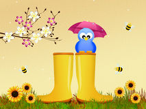 Bird on rain boots Stock Images