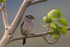 Bird ready to feed Stock Image