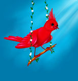 Bird red Funny Royalty Free Stock Image