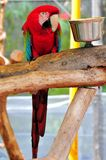 Bird, Red-and-green Macaw Stock Photo