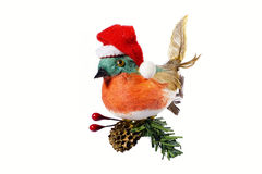Bird in a red hat of Santa Claus. Sitting on a Christmas tree wi Royalty Free Stock Images