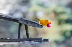 Bird with red heart in its beak is ready to give his beloved Royalty Free Stock Photo