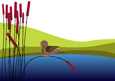 Bird and reed Stock Photo