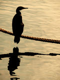 Bird reflection. S Lake with sunset light royalty free stock image