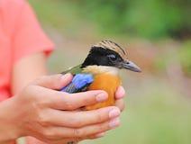 Bird relinquish Stock Image
