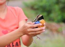 Bird relinquish Royalty Free Stock Image