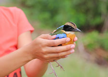 Bird relinquish Stock Photography