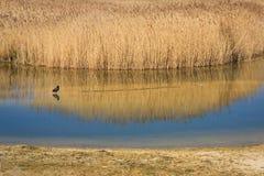 Bird reserve in Noke near Oxford. Stock Photos
