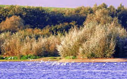 Bird reserve in southern Poland Royalty Free Stock Image