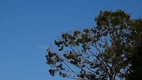 Bird rest on big tree with blue sky. Background stock footage