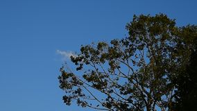 Bird rest on big tree with blue sky. Background stock video footage
