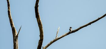 Bird rest at dried tree stock images