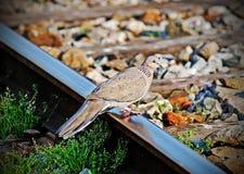 Bird rest on train track Stock Image