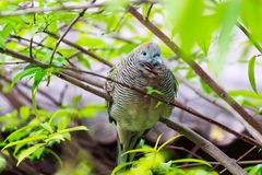 The bird rest at tree Royalty Free Stock Photo