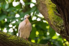 A bird resting in isolation on a rock. In a forest. Very nice green bokeh background Stock Photos