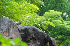 A bird resting in isolation on a rock. In a forest. Very nice green bokeh background Royalty Free Stock Photography