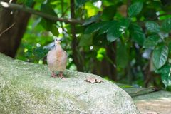 A bird resting in isolation on a rock. In a forest. Very nice green bokeh background Royalty Free Stock Images