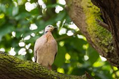 A bird resting in isolation on a rock. In a forest. Very nice green bokeh background Stock Photography
