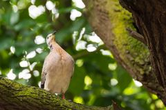 A bird resting in isolation on a rock. In a forest. Very nice green bokeh background Stock Image