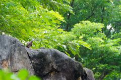 A bird resting in isolation on a rock. In a forest. Very nice green bokeh background Royalty Free Stock Image