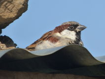 A bird Royalty Free Stock Image