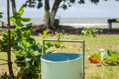 Bird is resting on a trash can in Central america. People trying to be clean in their resorts. Just next to the beach and ocean Royalty Free Stock Photo
