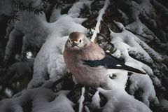 A bird resting in a tree on a snowy day stock photography