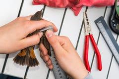 Bird ringing Stock Photos