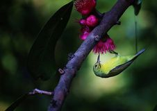 Bird rising. Flying on the tree in The garden home from Chiangmai Thailand stock photography