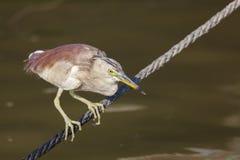 Bird in river Ganges, Varanasi. Uttar Pradesh, India Stock Photos