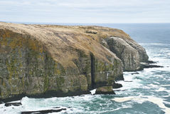 Bird Rock. Cape St. Marys, Newfoundland Ecological Reserve showing Wide View of Coastal Cliffs and Foaming Ocean, including Bird Rock Royalty Free Stock Image