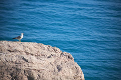 Bird On The Rock. Seagull on rock near blue sea with free space for text Stock Image