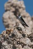 Bird on rock formations Stock Photos