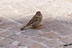 Bird on rock on lake Royalty Free Stock Image