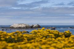 Bird Rock at 17 Mile Drive Stock Photos