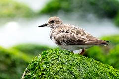 Bird on the Rock. Bird on the sea rock, this is a beautiful bird select like a pic of the day and the year Stock Image