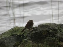 Bird on Rock Stock Photography