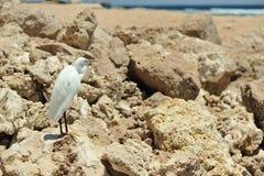 Bird in rocks Stock Images