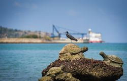 Bird on the rocks at bay coast sea ocean fishing boat background stock images